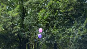 A man walks down the street with two balloons. Amid green trees stock video footage