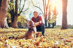 Man walks with his beagle in autumn park in sunny day royalty free stock photography