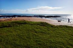 Man walks his dog on the beach Stock Photography