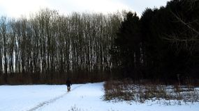 Man Walking with Dog Through Winter Landscape royalty free stock photo