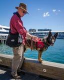Man walks his service dog along the waterfront promenade. SIDNEY - AUSTRALIA NOVEMBER 2, 2016: Man walks his service dog along the promenade at Darling Harbour Royalty Free Stock Image