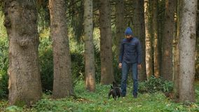 Man walks outside the city with his dog. Bearded man walks outside the city with his dog. owner raise and plays his pet, woodland park area pine forest stock video footage