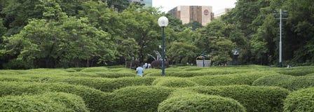 Man walks a shrub maze at Kowloon Park, Hong Kong stock image