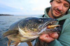Man Walleye Fishing Crankbait Lure royalty free stock photos