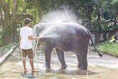 Man washes a baby elephant stock image