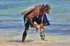 The man washes the seller shells prey on the beach in Punta Cana, Dominican Republic Royalty Free Stock Photo