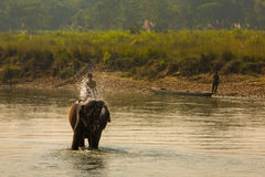 Man washing his elephant on the banks of river in Chitwan park in Nepal Stock Images
