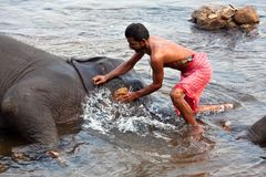 Man washing his elephant in India Stock Photos