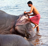 Man washing his elephant, India Stock Photos