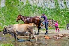 Man washing a horse. KETRISI, GEORGIA - JULY 17: Man washing a horse and a girl playing with water, Truso valley, Kazbegi. July 2017 stock photo