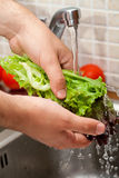 Man washing salad leaves Stock Photography