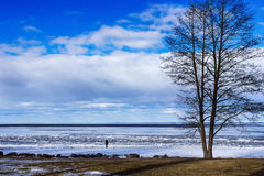 A man is watching  on the Baltic sea. A man is watching on the Baltic sea in the winter on the sunny day near a big tree Royalty Free Stock Images