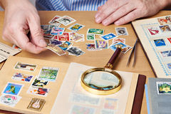 Man watching a collection of postage stamps Royalty Free Stock Photo