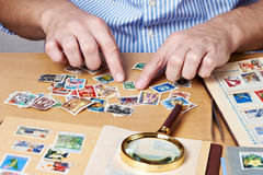 Man watching a collection of postage stamps Stock Images