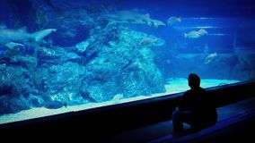 Man Watching Fish Through Glass In Aquarium. Man sitting in front of huge tank with fish and shark with people passing in background stock video