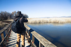 Man watching nature with binoculars, in a wood bridge Royalty Free Stock Image