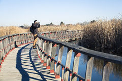 Man watching nature with binoculars, in a wood bridge over the water. Stock Photography