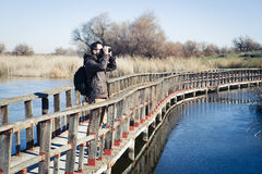 Man watching nature with binoculars, in a wood bridge over the water. Royalty Free Stock Images