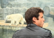 Man watching pollar bear Stock Photography