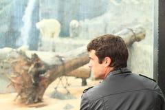 Man watching pollar bear stock images