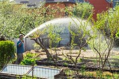 Man watering the beds in the garden stock photos
