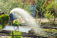 Man watering the beds in the garden royalty free stock image