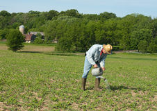 Man watering crops Stock Photos