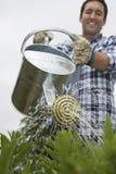 Man Watering Crops In Field Stock Photo