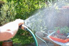 Man watering the garden with a sprinkler hose on a sunny day. Man watering the garden with a sprinkler hosepipe on a sunny day royalty free stock images