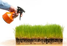 Man watering grass Stock Image