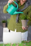 Man watering green plant at home Stock Image