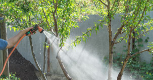 Man watering from a hose plants in the garden. Man watering from the hose plants in the garden stock photos