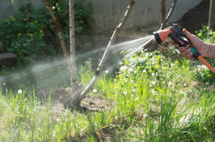 Man watering from a hose plants in the garden royalty free stock photo