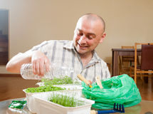 Man watering parsley and dill Royalty Free Stock Images