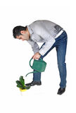 Man watering plant. Stock Images