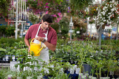 Man watering plants Stock Photos