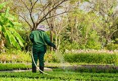 Man watering plants in garden Stock Photo