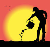Man watering a small plant Stock Photo