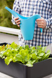 Man watering vegetable garden in container on balcony Royalty Free Stock Images
