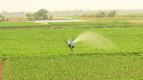 Man watering vegetables fields Royalty Free Stock Photo