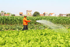Man watering vegetables fields Stock Photography