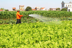 Man watering vegetables fields Stock Photos