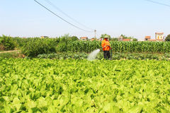 Man watering vegetables fields Royalty Free Stock Image