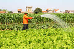Man watering vegetables fields Stock Images