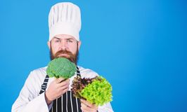 Man wear hat and apron hold salad. Healthy nutrition. Bearded hipster professional chef hold salad greenery. Healthy royalty free stock image