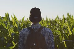 Man Wearing Black Fitted Cap Facing Corn Field Royalty Free Stock Photos