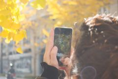 Man Wearing Black Jacket Using Iphone Taking Picture of Green Leaf Tree Royalty Free Stock Photos