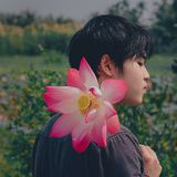 Man Wearing Black Top Holding Pink-and-white Petaled Flower Royalty Free Stock Photography