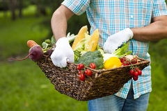 Man wearing gloves with fresh vegetables in the basket in his ha Royalty Free Stock Photos