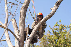 Man wearing safety harness in a tree Stock Images